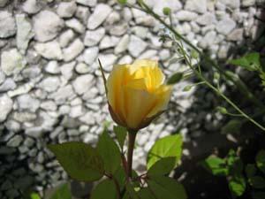 20080710_01.jpg