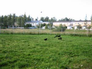 20080811_09.jpg