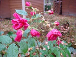 20081011_26.jpg