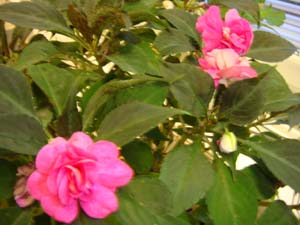 20081107_04.jpg