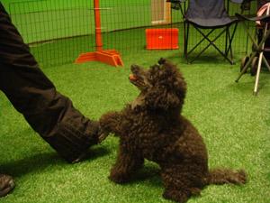 Koiran kanssa - Agidream's