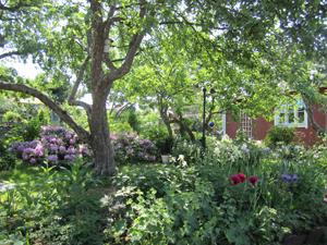 Ihana puutarha