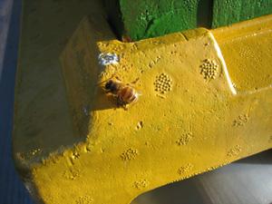 mehilainen1.jpg